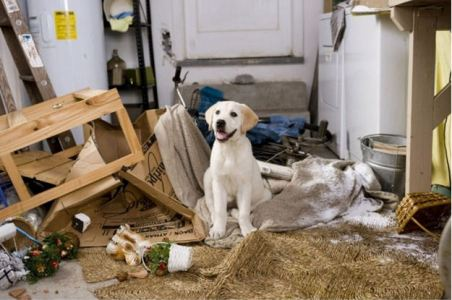 Why Dogs Chew The Furniture And How To Stop Them