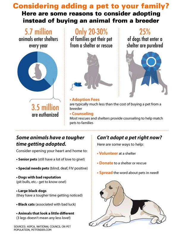 every home should adopt a pet animal Argumentative essay on every home should adopt a pet animal  click to continue how to keep a healthy body essay.