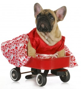 dog-wagon-272x300
